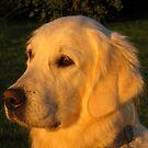 My golden girl in a golden light by Trine