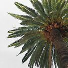Palm Tree by Laura Cooper