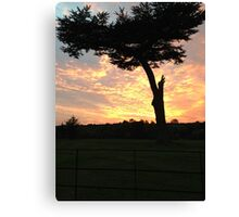 Tree in silhouette at sunset Canvas Print