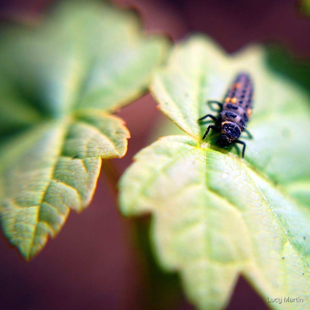 Ladybird Larva on Purple by Lucy Martin