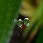 Dew Drops by wippapics