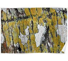 Yellow Nature Poster