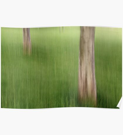 Trunks in the Grass Poster