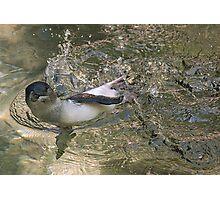 Splashin Penguin Photographic Print
