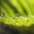 Strawberry Dew by Melzo318