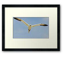 that's MY landing space! Gannet, Saltee Island, County Wexford, Ireland Framed Print