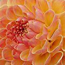 creamsicle by Kathy Yates