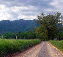 Cade's Cove~Great Smoky Mountains National Park by Jane Best