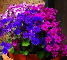 Splashes Of Senetti by Susie Peek