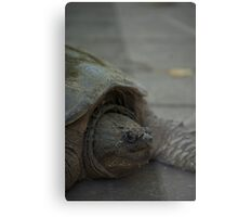 Snapping Turtle 2 Metal Print