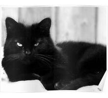 Portrait of a Cat Poster