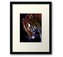 Grace of a Tiger Framed Print