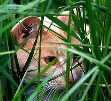 Crouching Tiger Hidden... Kitten? by jennimarshall