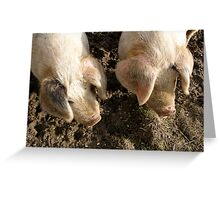 Two Little Piggies... Greeting Card