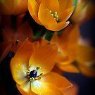 Orange Star by NEmens
