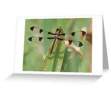 Gossamer Wings Greeting Card