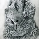 Newfie drawing donation by Linda Costello Hinchey