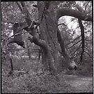Fordy's Favorite Tree by Barbara Wyeth