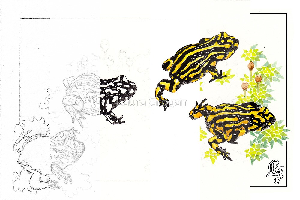 Corroboree frogs - work in progress by Laura Grogan