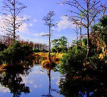 Florida's Own Reflection by Michael Damanski