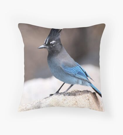 Camp Robbers Throw Pillow