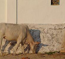 White Cow by Leonie Naronah
