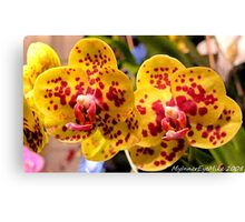 #296          Yellow & Red Spotted Orchid Canvas Print
