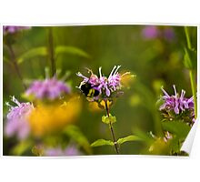 Flowers & Bumble Bee Poster