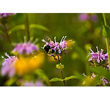Flowers & Bumble Bee Photographic Print