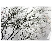 Water Branches Poster