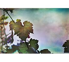 A Ribbon in the Sky Photographic Print