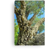 Cork Tree Metal Print