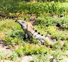 Iguana Watches Me by patriciagriffin