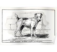 All about dogs a book for doggy people Charles Henry Lane 1900 0151 Wirehaired Fox Terrier_jpg Poster
