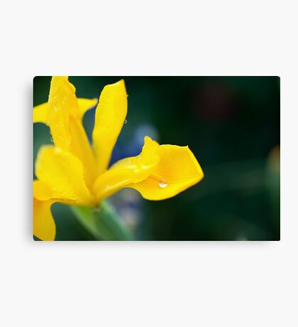 shallow depth of focus on a silvery water drop Canvas Print