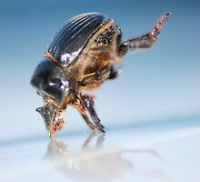 Break Dancin' Beetle by xPressiveImages