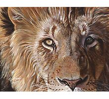 A Lion Face Photographic Print
