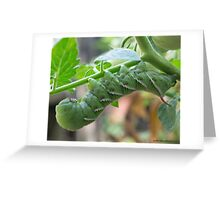 HUNGRY PEST Greeting Card
