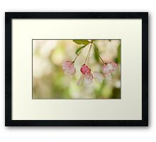 Spring Glow Framed Print