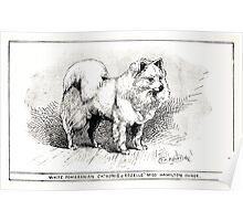 All about dogs a book for doggy people Charles Henry Lane 1900 0255 White Pomeranian_jpg Poster