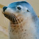Salty the Seal by Penny Smith