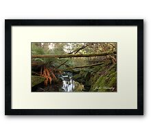 Tasmanian Rainforest Framed Print