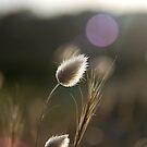 summer longing by craig jarman