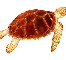 Loggerhead Sea Turtle by Suzannah Alexander