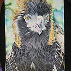 Black Breasted Buzzard Part 1 by Lyrebird