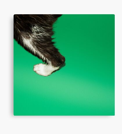 kitty foot Canvas Print