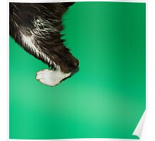kitty foot Poster