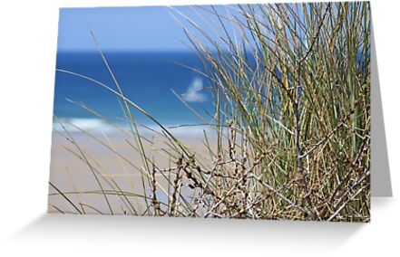 From the dunes by Melanie G