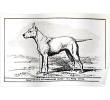 All about dogs a book for doggy people Charles Henry Lane 1900 0221 Bull Terrier_jpg Poster