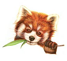 Red Panda by Suzannah Alexander